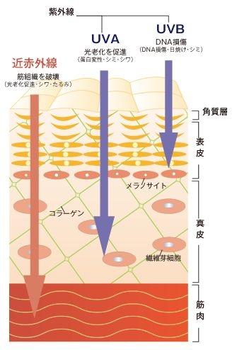近赤外線は肌の奥まで届く